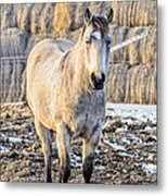 White Horse And Hey Metal Print