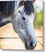 White Horse Head Metal Print