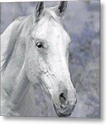 White Horse In Lavender Pasture Metal Print