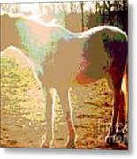 White Horse In The Sun Metal Print