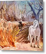 White Horses And Bull In The Camargue Metal Print