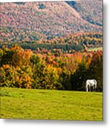 White Horses Grazing With View Of Green Mtns Metal Print