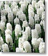 White Hyacinths Metal Print