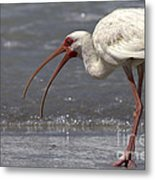 White Ibis On The Beach Metal Print