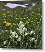 White Indian Paintbrushes Metal Print by Aaron Spong