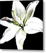 White Lily - Elegant Black And White Floral Art By Sharon Cummings Metal Print by Sharon Cummings