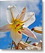 White Lily Flower Against Blue Sky Art Prints Metal Print