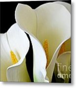White Lily Trio Metal Print