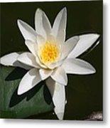 My White Lotus Metal Print
