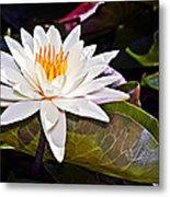 White Lotus Flower Metal Print