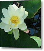 White Lotus I Metal Print