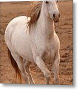 White Mare Approaches Number One Close Up Brighter Metal Print