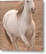 White Mare Approaches Number One Close Up Muted Metal Print