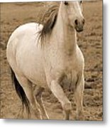 White Mare Approaches Number One Close Up Sepia Metal Print