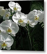 White Moth Orchid Phalaenopsis And Ferns Metal Print