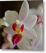 White Orchid Close Metal Print