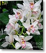 White Orchid In Full Bloom Metal Print