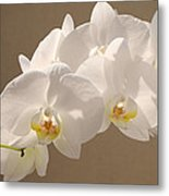 White Orchid Photograph Metal Print