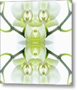 White Orchid With Stems Metal Print