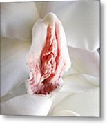White Orchidee Metal Print