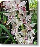 White Orchids 1 Metal Print by Timothy Blair