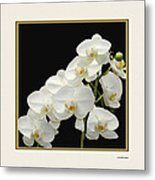 White Orchids II Metal Print by Tom Prendergast