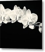 White Orchids Monochrome Metal Print by Adam Romanowicz
