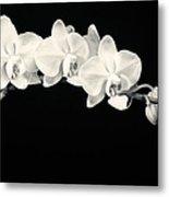 White Orchids Monochrome Metal Print
