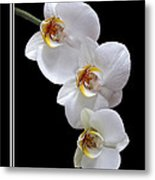 White Orchids On Black Vertical Metal Print