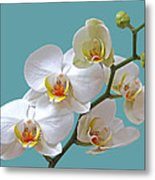 White Orchids On Ocean Blue Metal Print