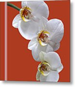 White Orchids On Terracotta Vdertical Metal Print