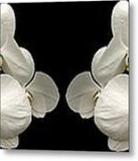 White Orchids Panorama Metal Print