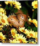 White Peacock Butterfly I I Metal Print