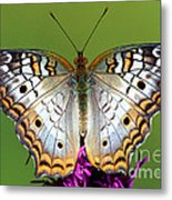 White Peacock Butterfly Metal Print