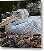 White Pelican 1 Metal Print