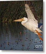 White Pelican 198 Metal Print