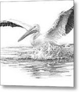 White Pelican Pencil Portrait Metal Print