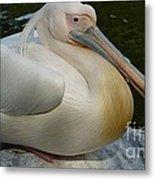 White Pelican Sitting Metal Print