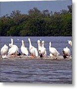 White Pelicans And Little Friends Metal Print