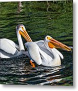 White Pelicans Fishing For Trout Metal Print by Kathleen Bishop