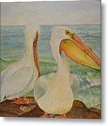 White Pelicans Metal Print