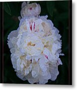 White Peony And Companion Abstract Flower Painting Metal Print