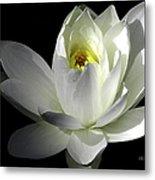 White Petals Aquatic Bloom Metal Print