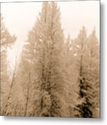 White Pines Metal Print