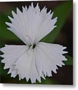 White Points Metal Print