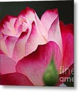 White Red Rose 01 Metal Print