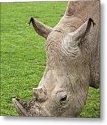 White Rhino 15 Metal Print