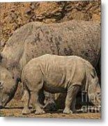 White Rhino 4 Metal Print
