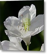 White Rhododendron Metal Print