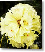 White Rhododendrons Metal Print